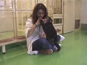 Claudia Sousa e um chimpanzé
