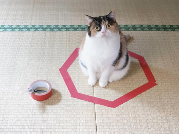 Não é círculo, mas alegamente atrai gatos...